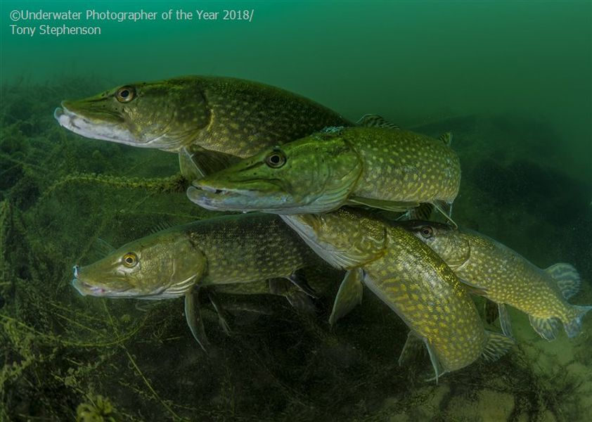 howmany pike underwater photography