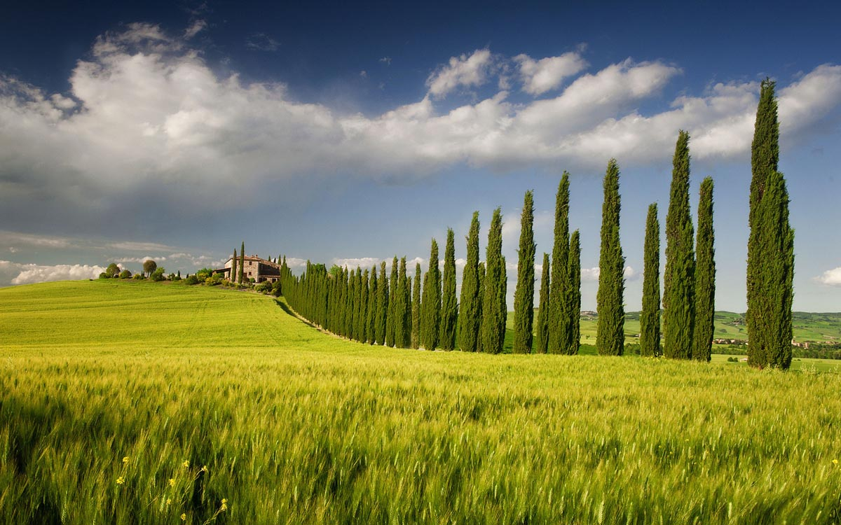 field landscape photography