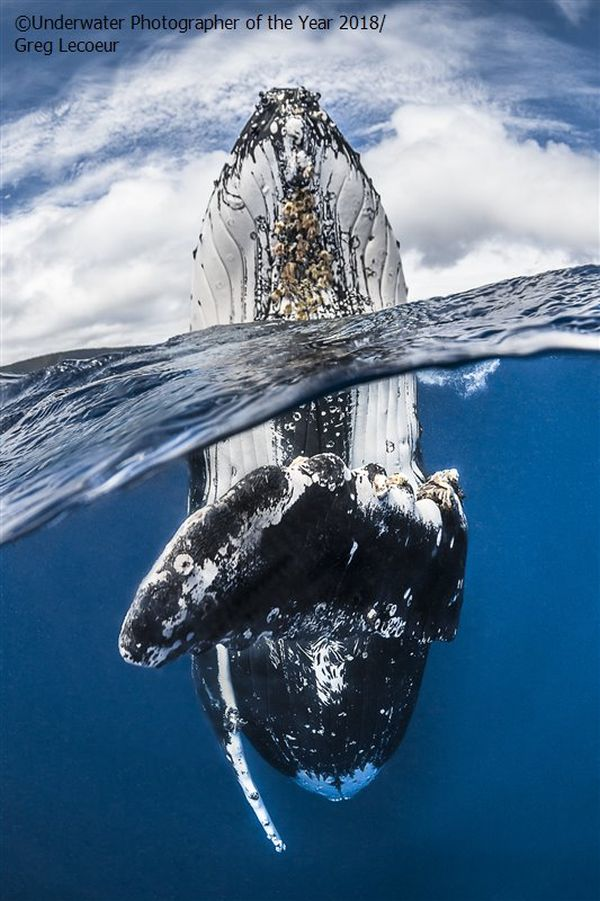 whale underwater photography