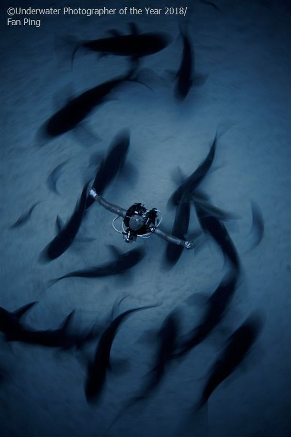 surrounded underwater photography