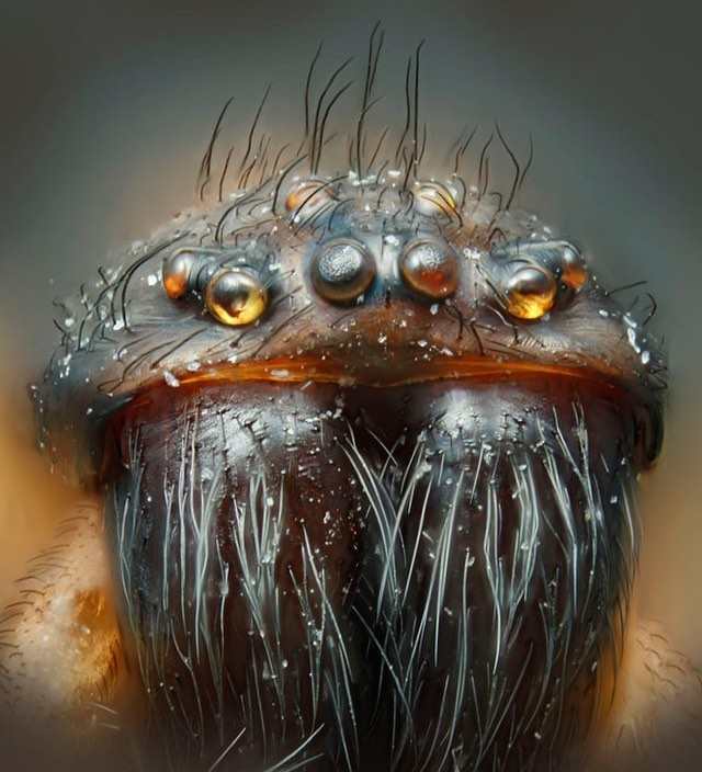 macro photography house spider