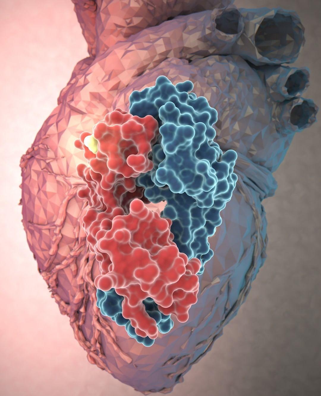 illustration heart aoi