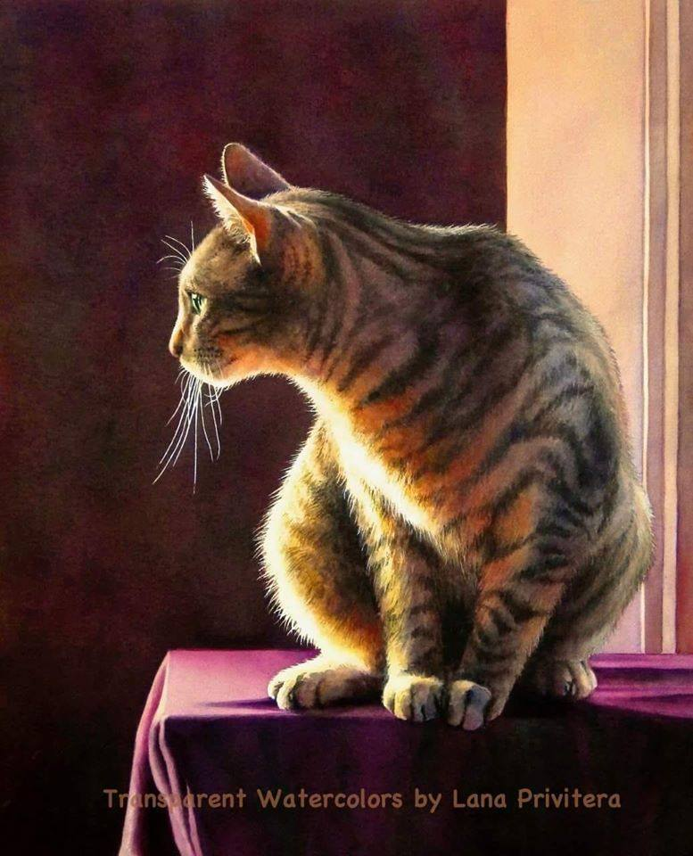 watercolor painting cat by lana matich privitera