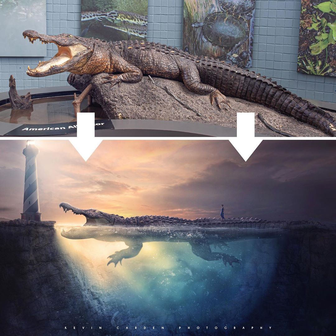 photo manipulation crocodile