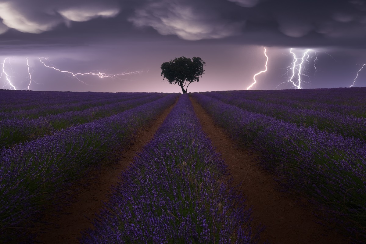 award winning photography electric storm on lavender by juan