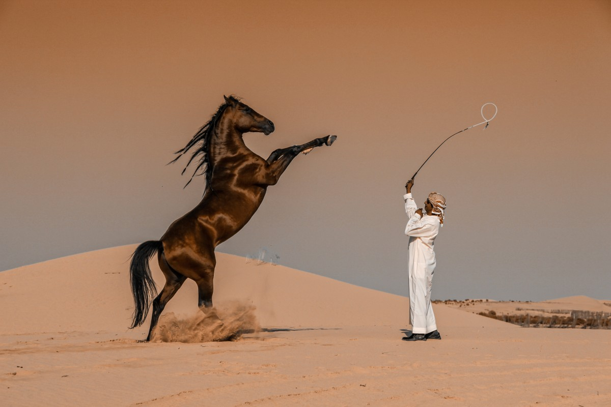 award winning photography horse motion by abbas