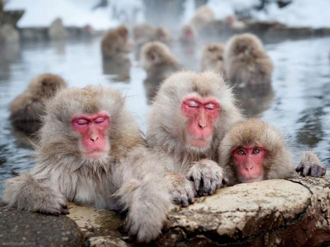 macaques nagano photography