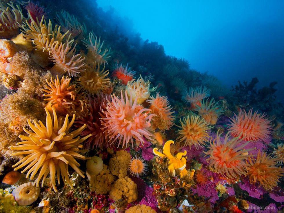 anemones soft corals underwater photography