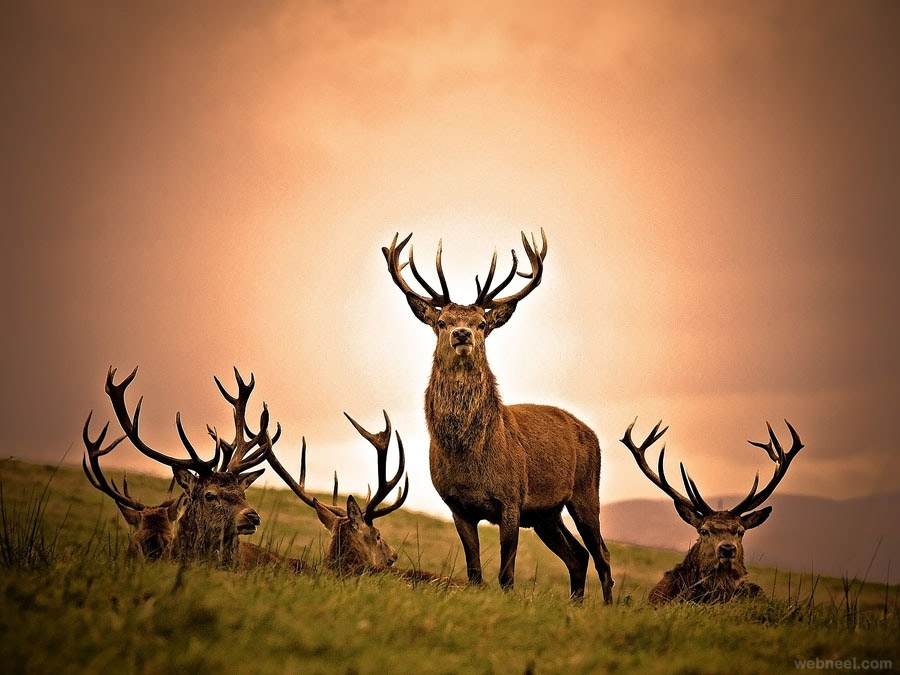 deer photography