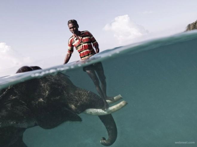 elephant underwater photography