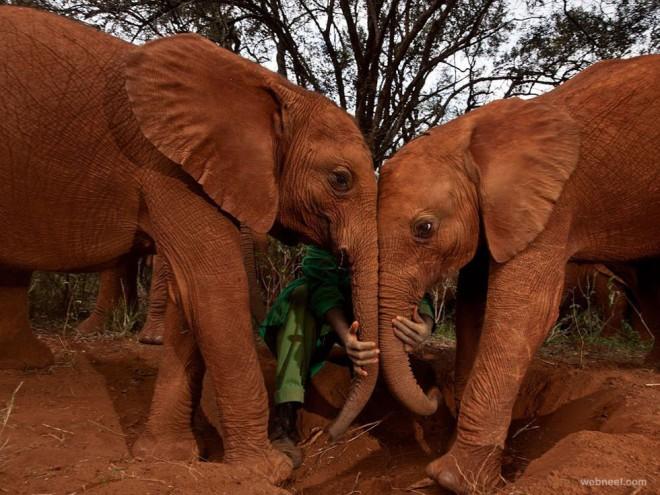 orphan elephants photography