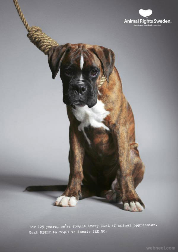 animal rights sweden boxer animal ad