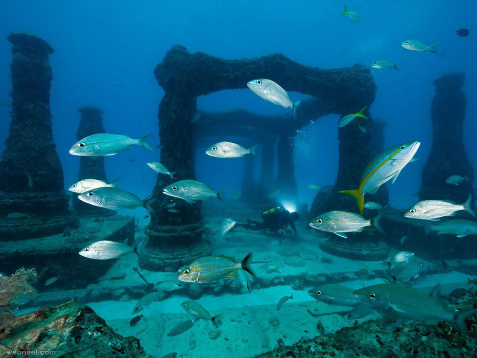 neptune memorial reef cemetery underwater photography