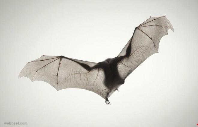 bat photography