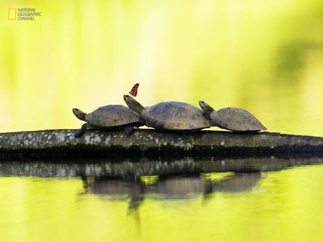 amazing tortoise photography