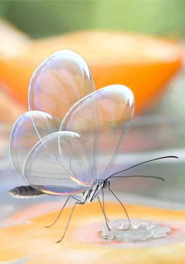 beautiful transparent butterfly photo