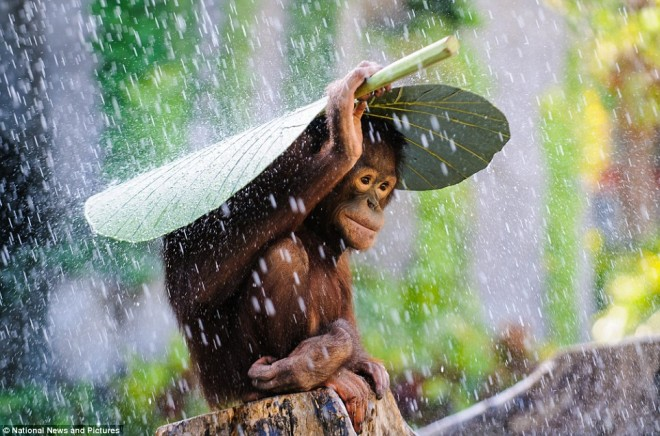rain photography by andrew suryono