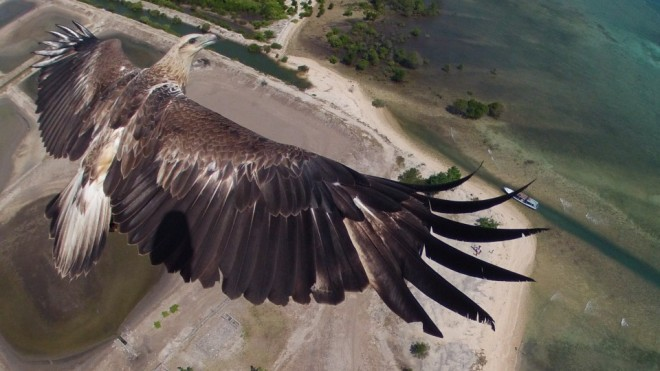 aerial photography contest