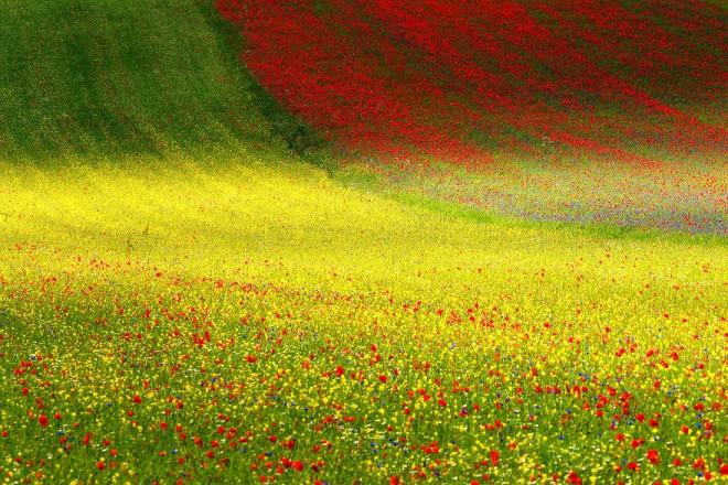 nature sony award winning photography