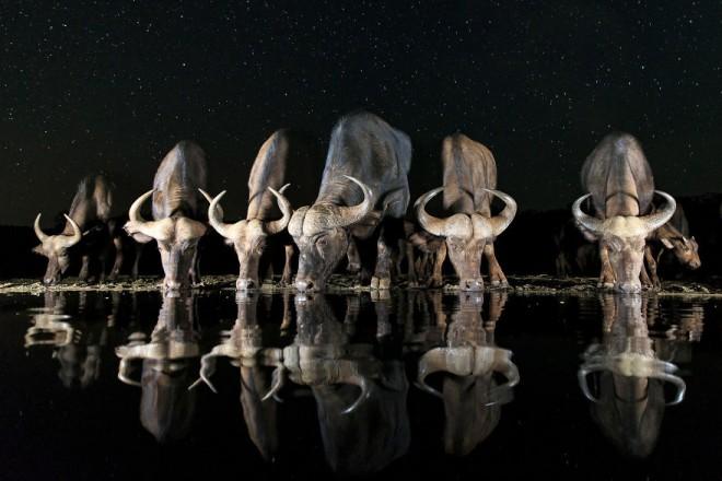 wildlife sony award winning photography