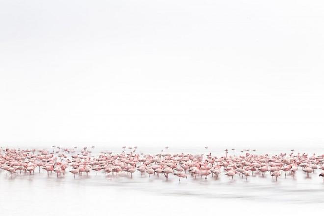 flamingoes sony award winning photography