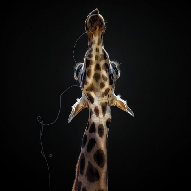 wildlife sony world photography award by pedro