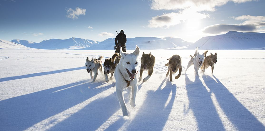 dog sledding natgeo travel photography by stuart dunn