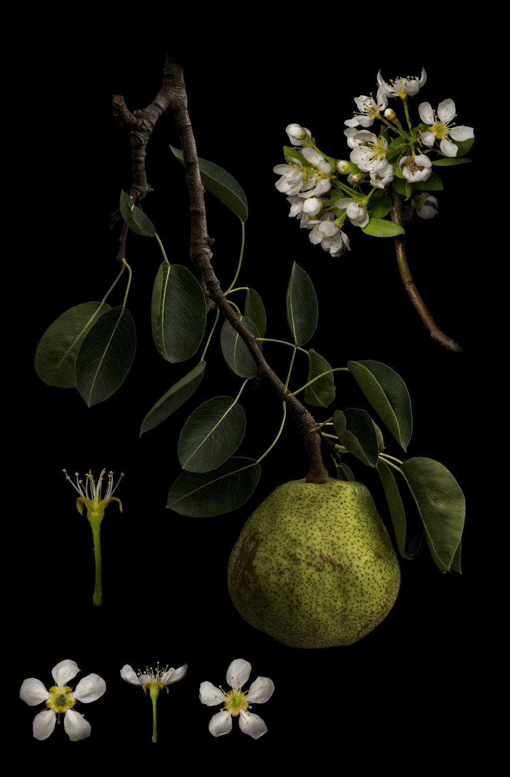 still life sony world photography award by masumi