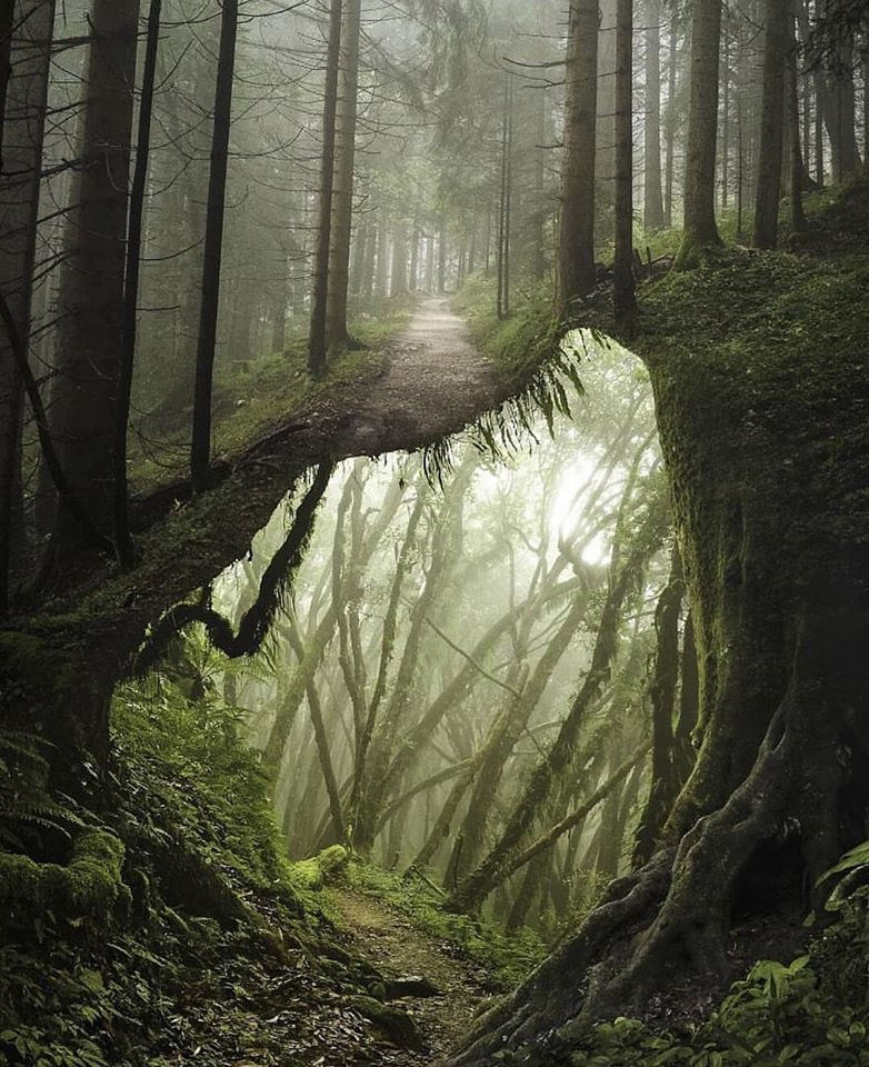 photo manipulation forest trail by justin peters