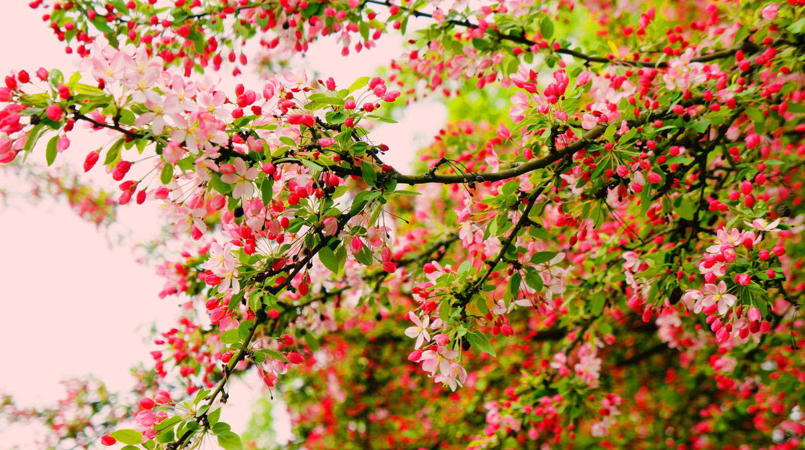 nature photography flowering tree by hiwa