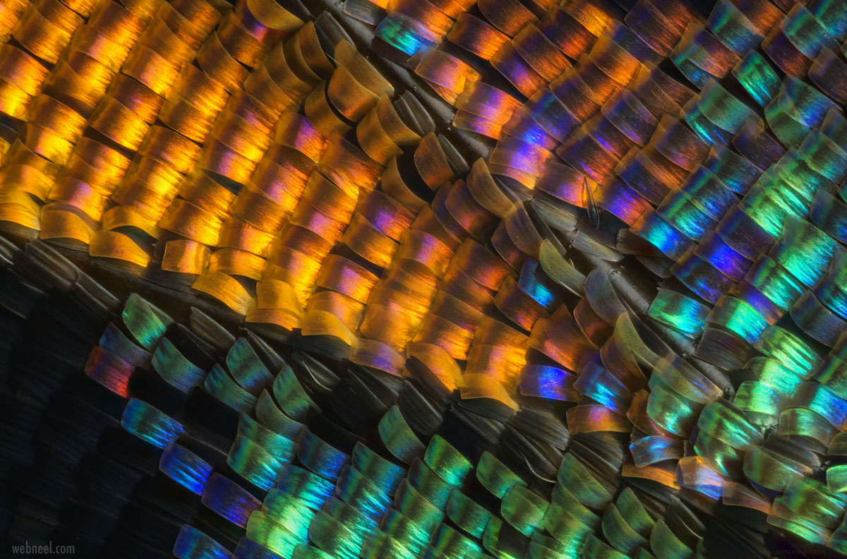 macro photography butterfly wing by borda
