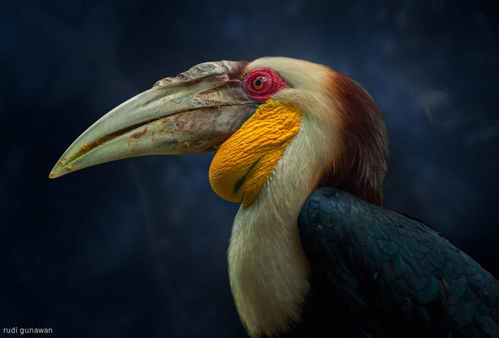 wildlife bird photography by rudi gunawan