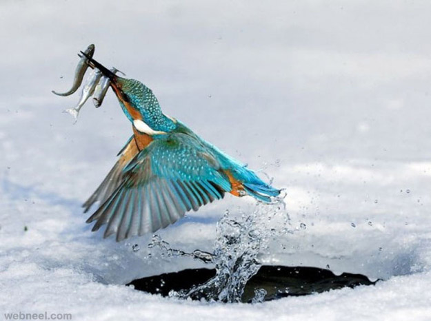 best king fisher bird photography