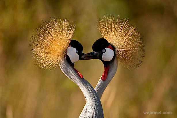 beautiful bird photography