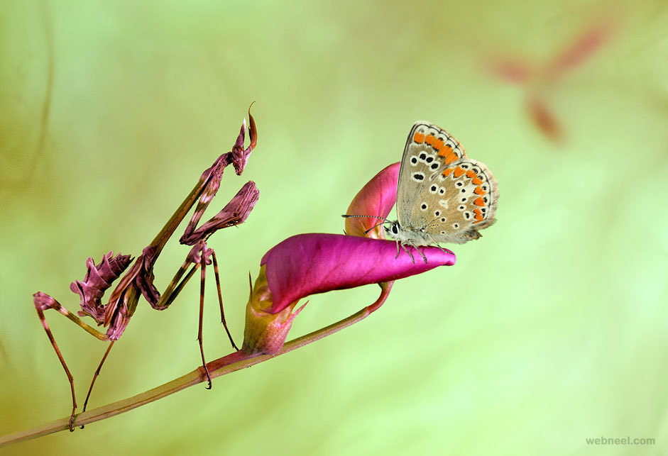 best macro photography