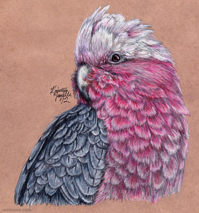 bird color pencil drawing