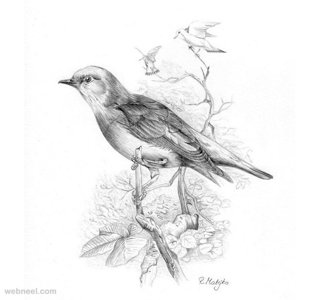 Bird Drawings 2