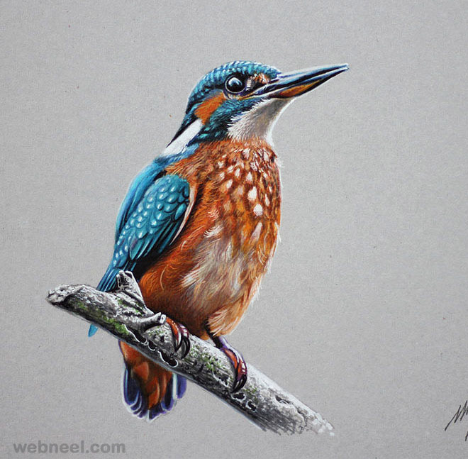 color pencil drawing bird
