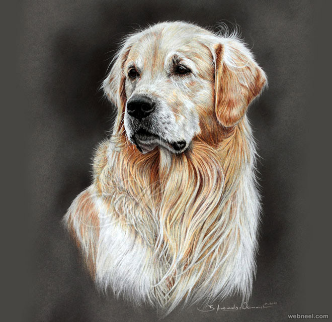 dogo color pencil drawing