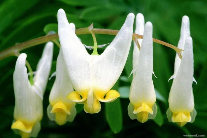 weird flower amazing white