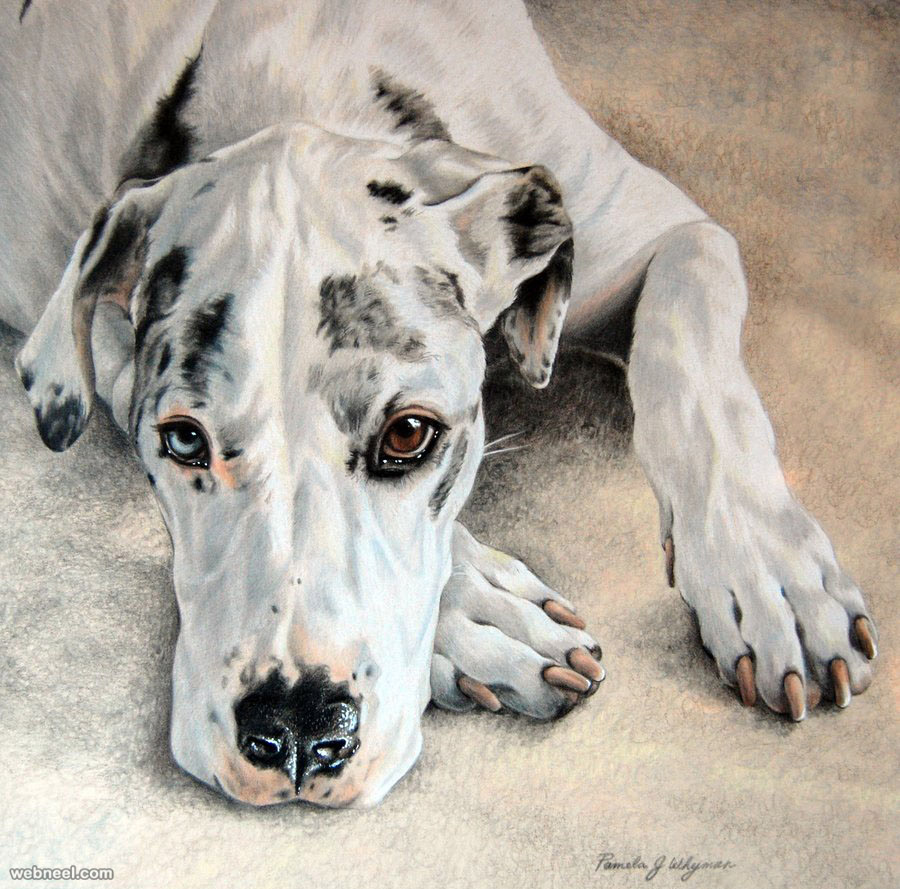 Dog Colored Pencil Drawing By Lightcircleart 23