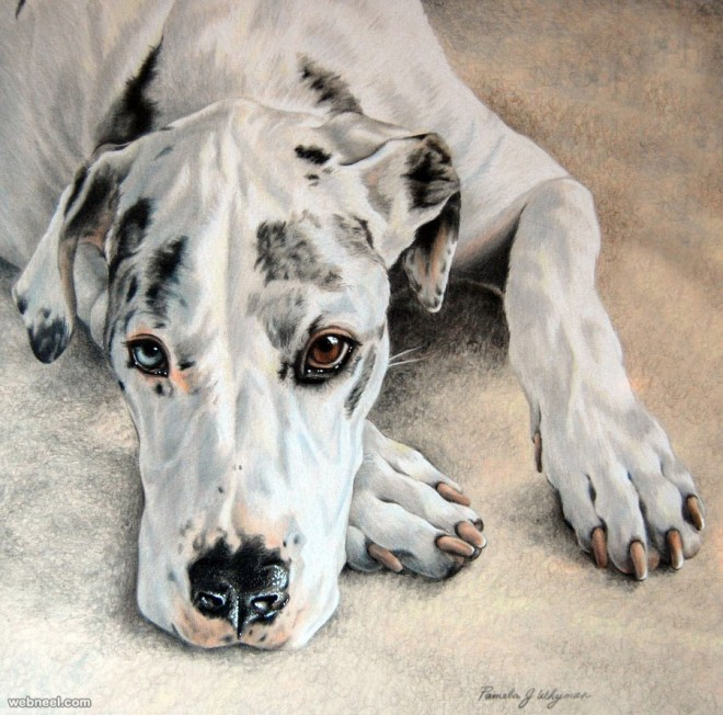 dog colored pencil drawing by lightcircleart