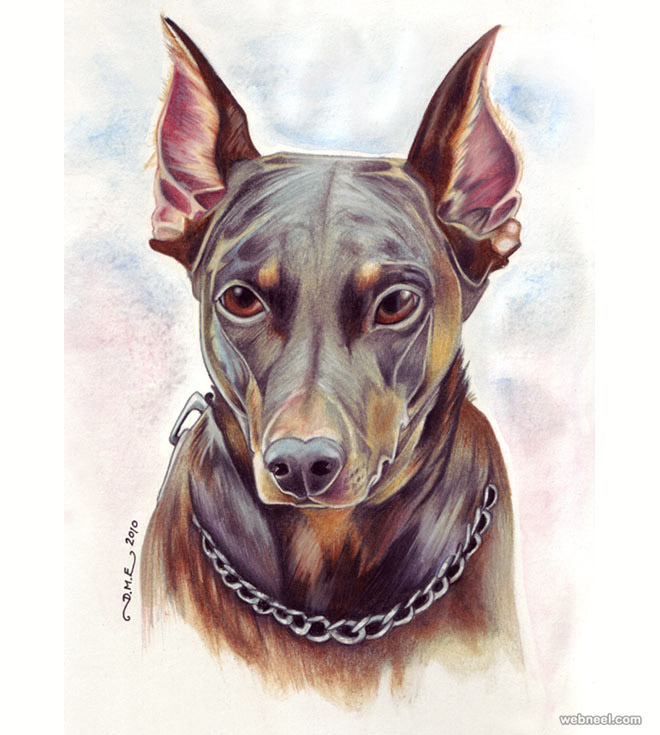 dog colored pencil drawing by tavington