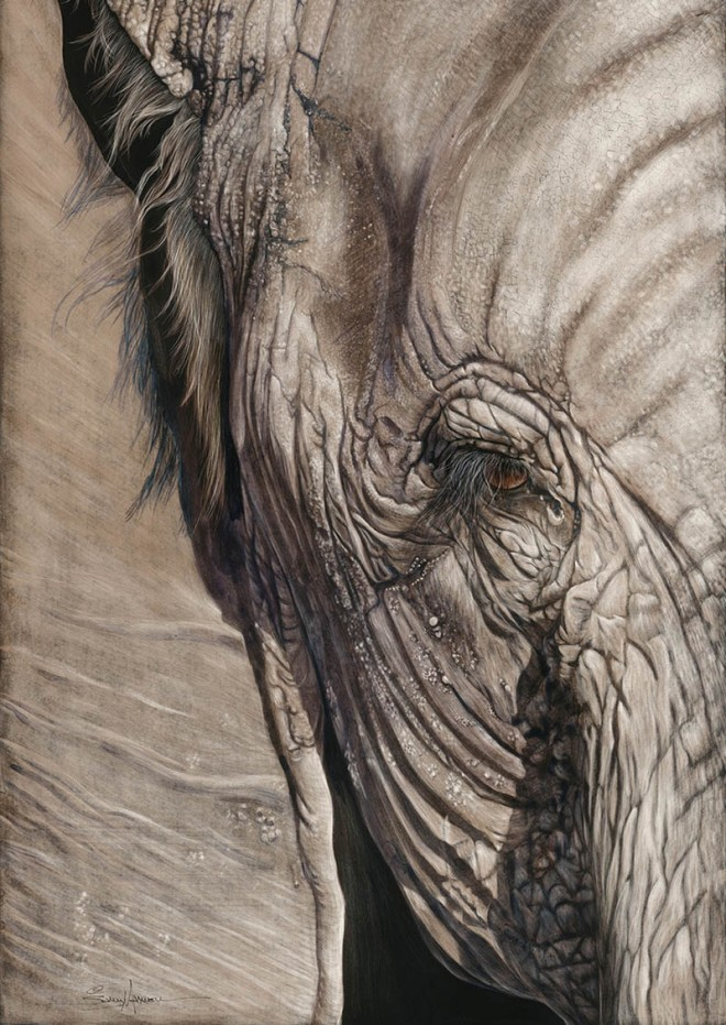 realistic elephant painting by sallymaxwell