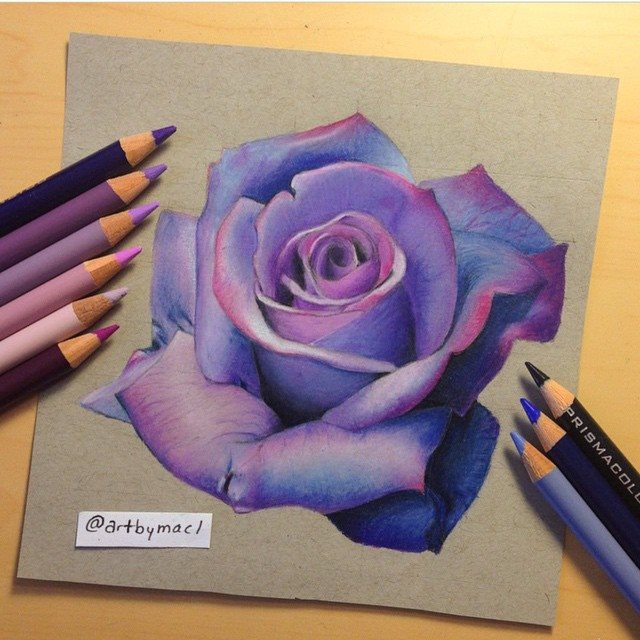 violet rose drawing by artbymacl