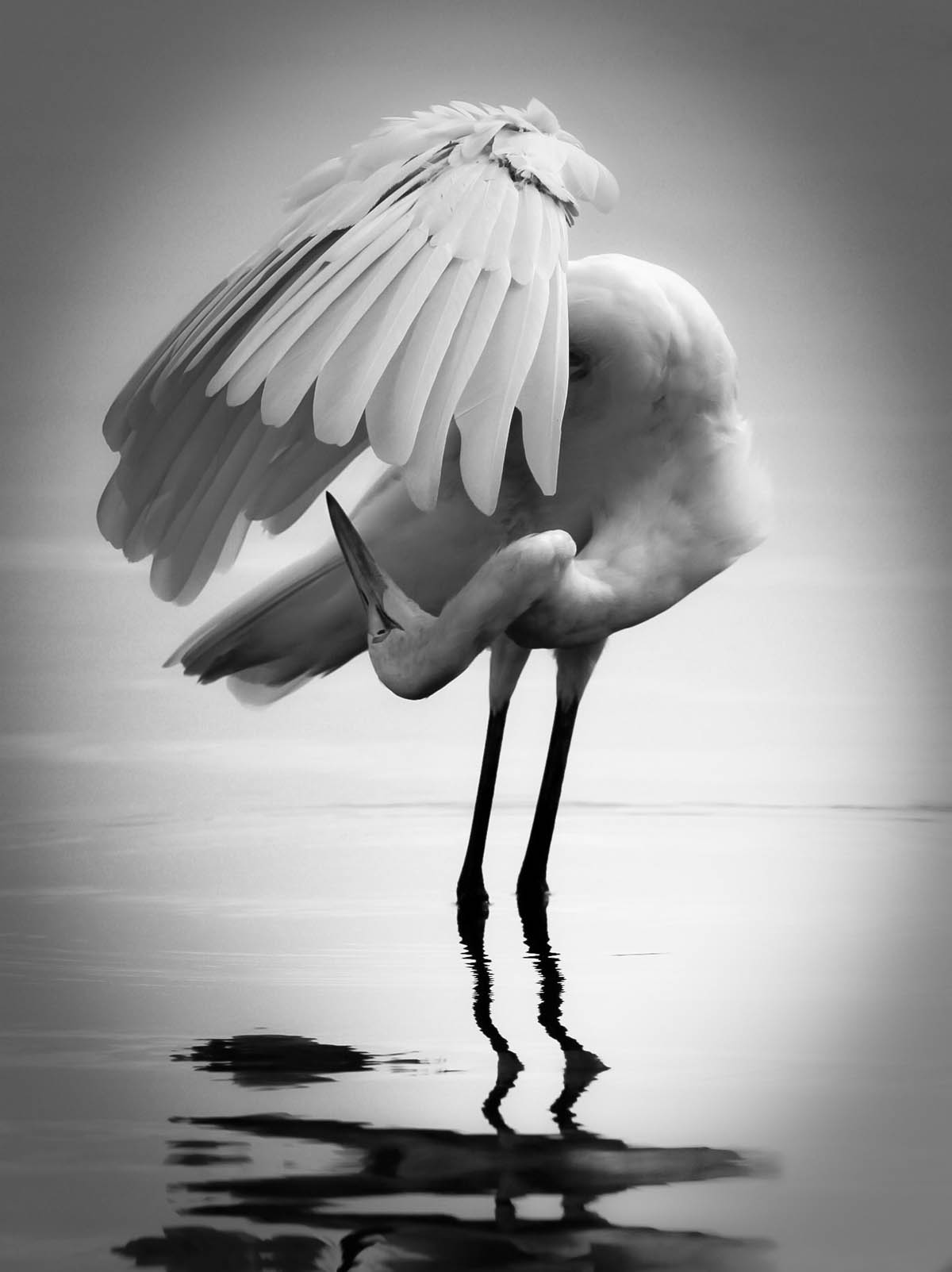 egret black white photography by craig oneal