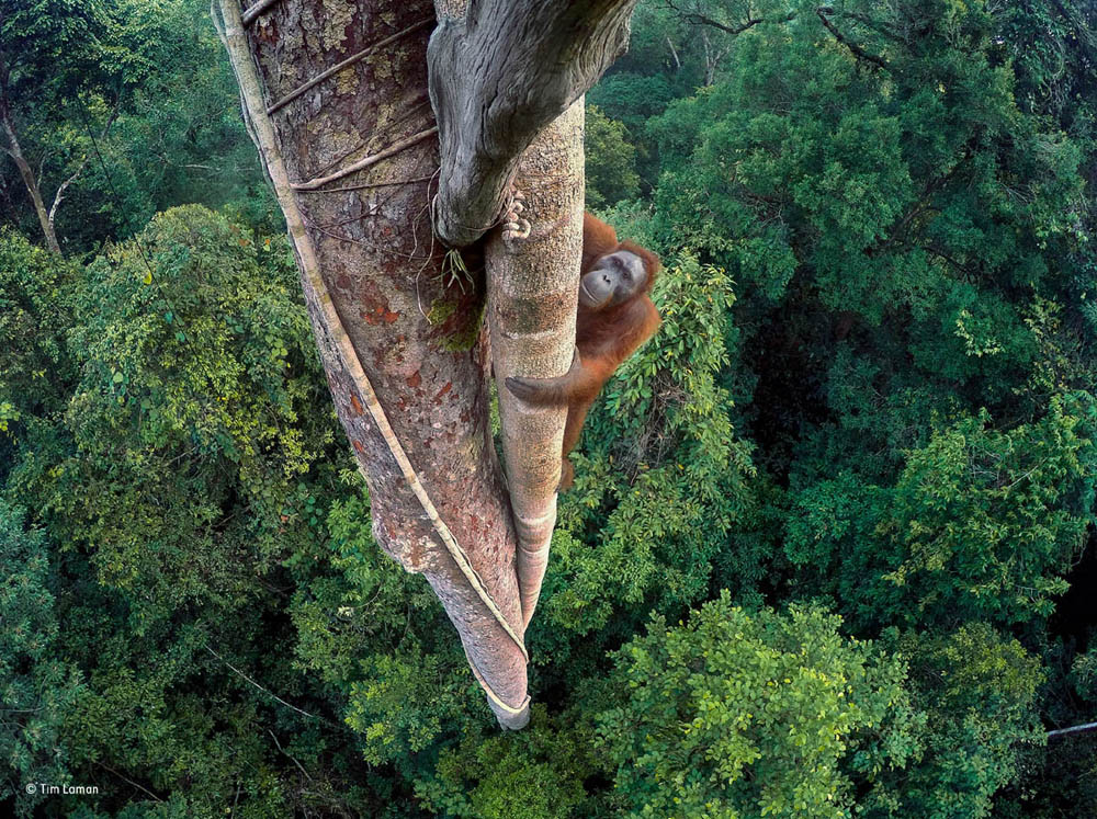 wildlife photography award tim lanson