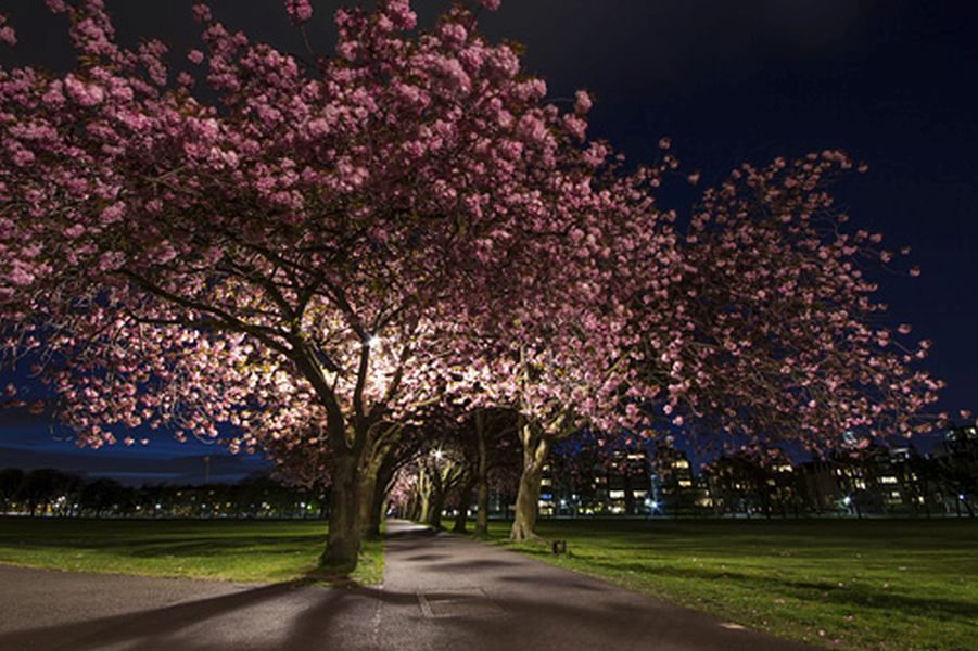 blossom scottish photographer of the year by drummond
