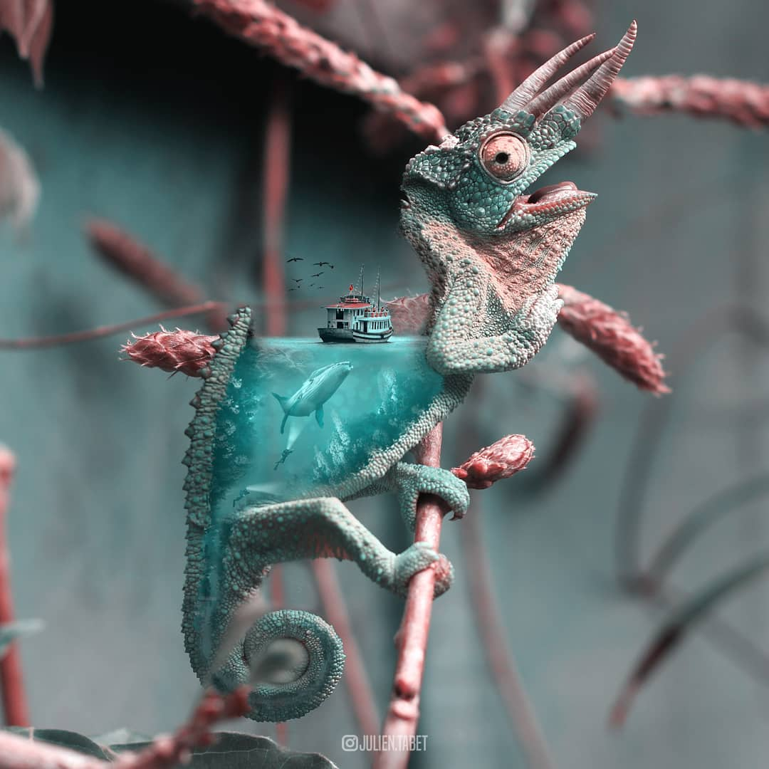 chameleon photoshop animal photo manipulation by julien tabet