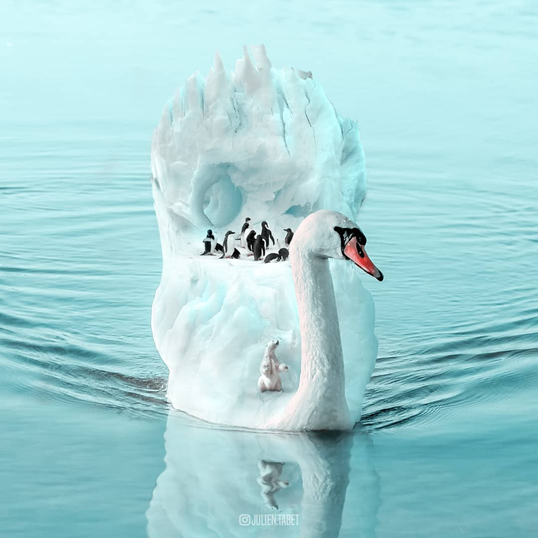 penguin photoshop animal photo manipulation by julien tabet